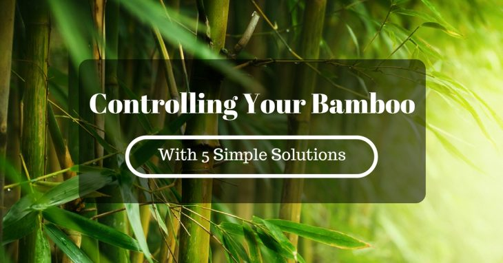 Controlling Your Bamboo With 5 Simple Solutions