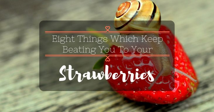 Eight Things Which Keep Beating You To Your Strawberries