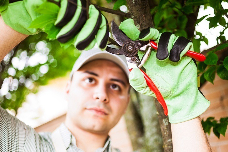 Learning how to use a pruning shear properly is must
