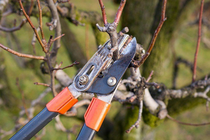 Pruning shears should be sharpened and cleaned before using