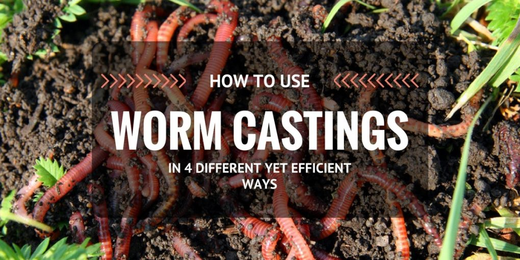 how-to-use-worm-castings