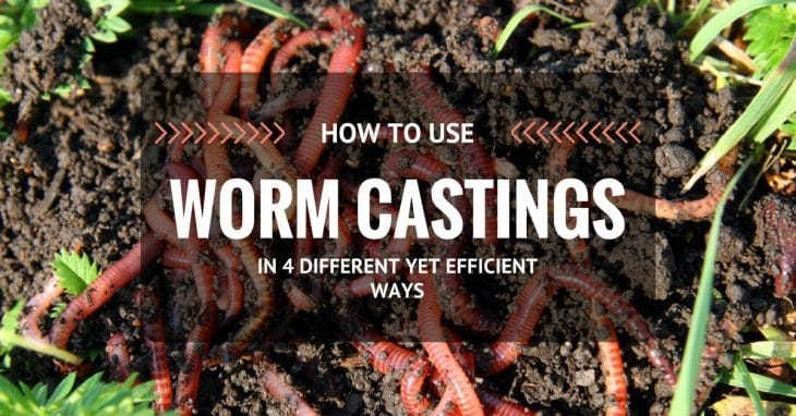 How To Use Worm Castings In 4 Different Yet Efficient Ways