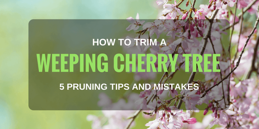 How to Trim a Weeping Cherry Tree