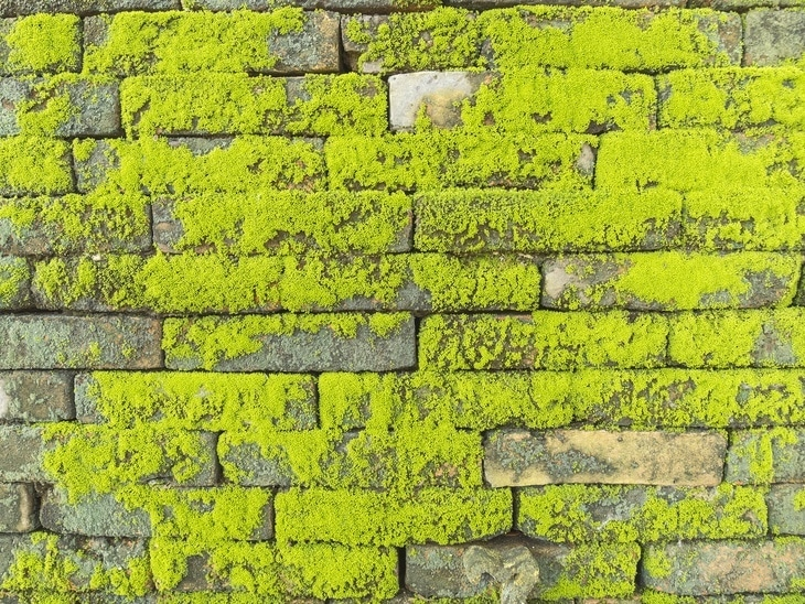 A few mosses growing on the brick wall