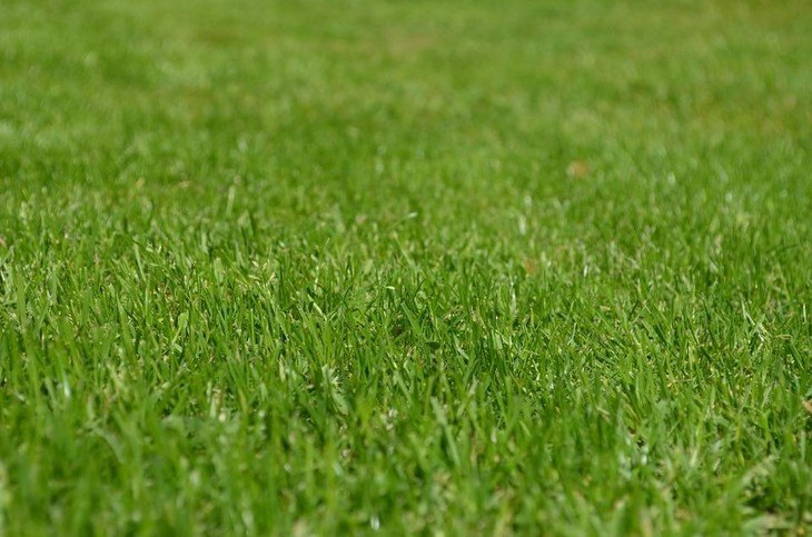 A green, healthy lawn without the invasion of annoying Dallisgrass