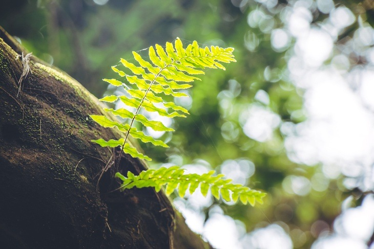 Fern is an example of a vascular plant