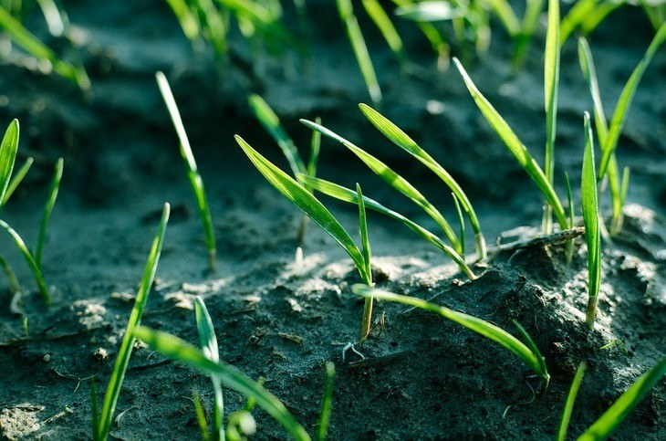How Long Does Grass Seed Take To Grow Fully? 6 Things to Know!