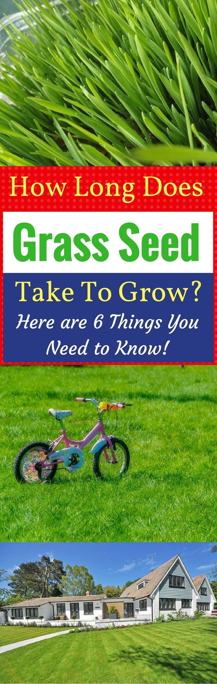 Ever Wonder How Long Does Grass Seed Take To Grow? Here are 6 Things You Need to Know!