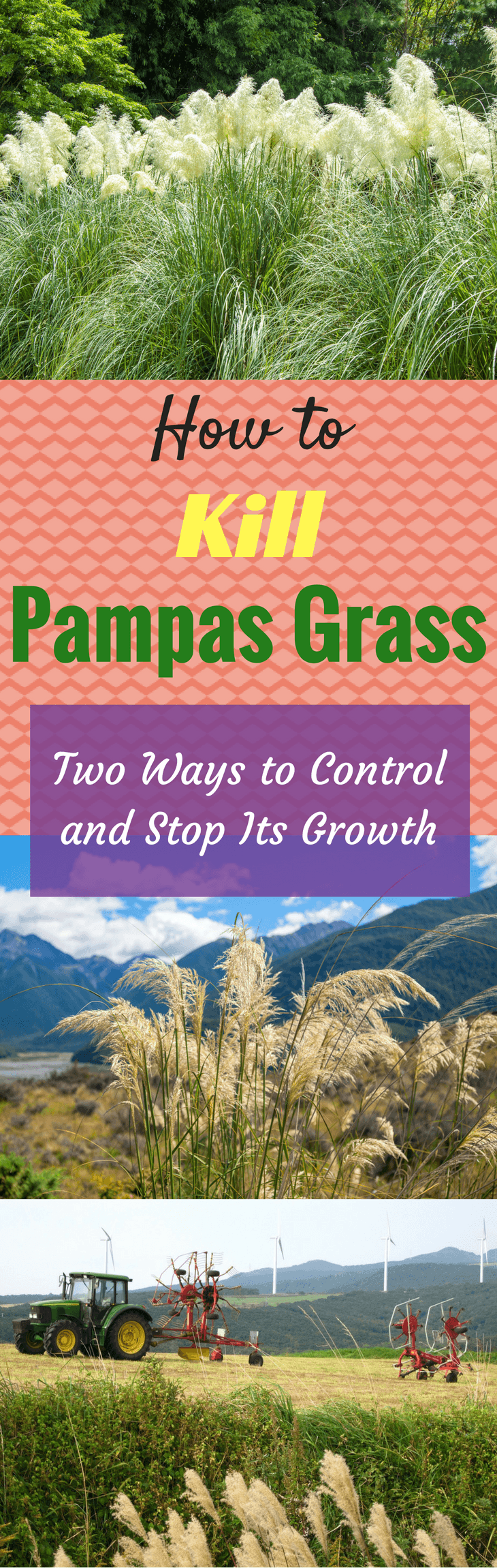 How to Kill Pampas Grass Two Ways to Control and Stop Its Growth