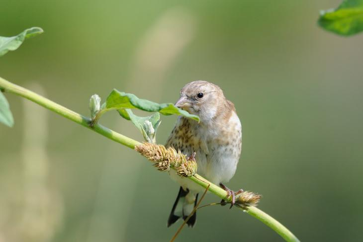 How to Protect Your Grass Seeds from Birds in 2 Fail-safe Ways