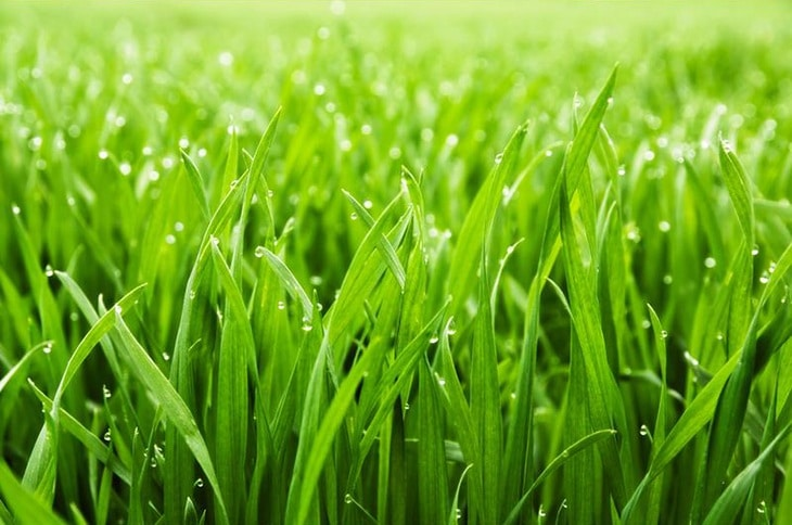 Make sure that your lawn doesn't have short grasses. Make sure that they are cut long enough to avoid infestation