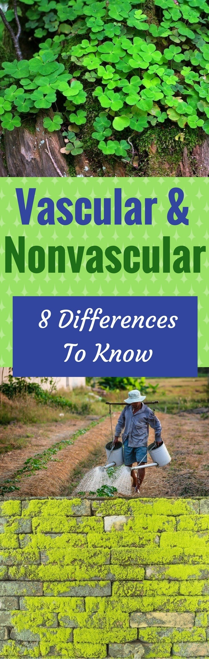 What's the Difference Between Vascular and Nonvascular Plants? 8 Differences To Know