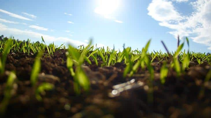 You can buy high-quality grass seeds and take proper care of them for the first few weeks after sowing