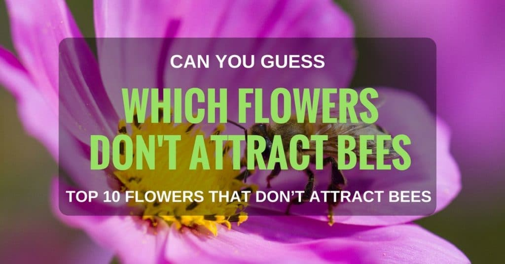 Can You Guess Which Flowers Don't Attract Bees? Top 10 Flowers That Don't Attract Bees