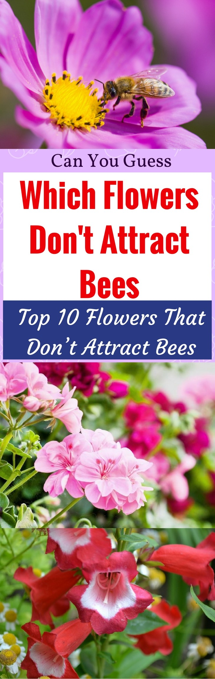 Flowers That Don T Attract Bees Pin It 1