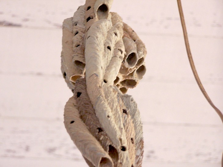 A Dirt Dobber Nest Resembles Chandelier On The Ceiling