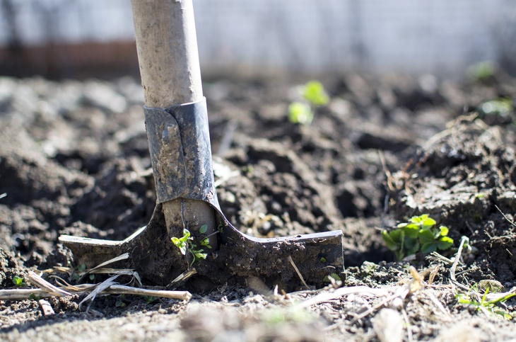 Compacted soil makes a firm ground for seeds and seedlings to grow