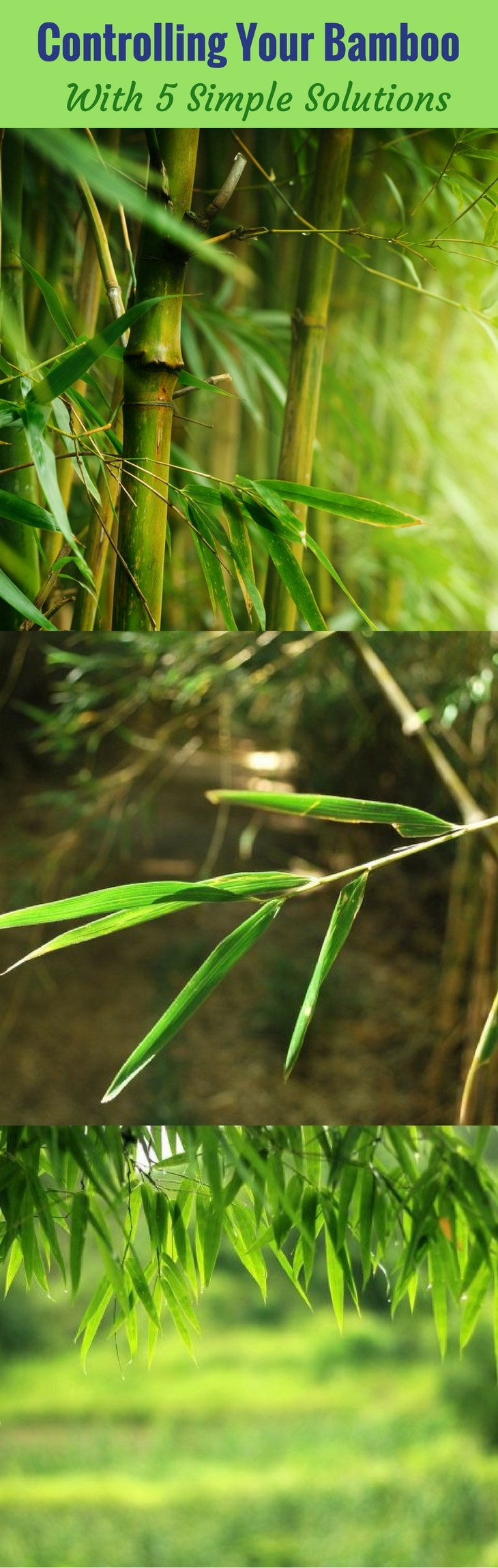 Controlling Your Bamboo - With 5 Simple Solutions