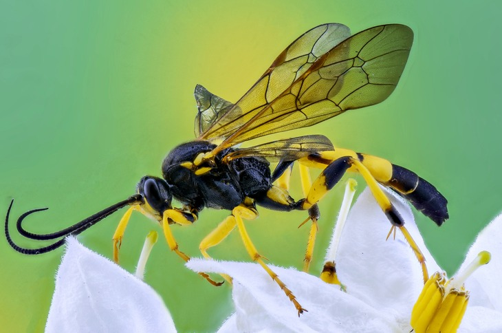 how to get rid of wasps in dirt