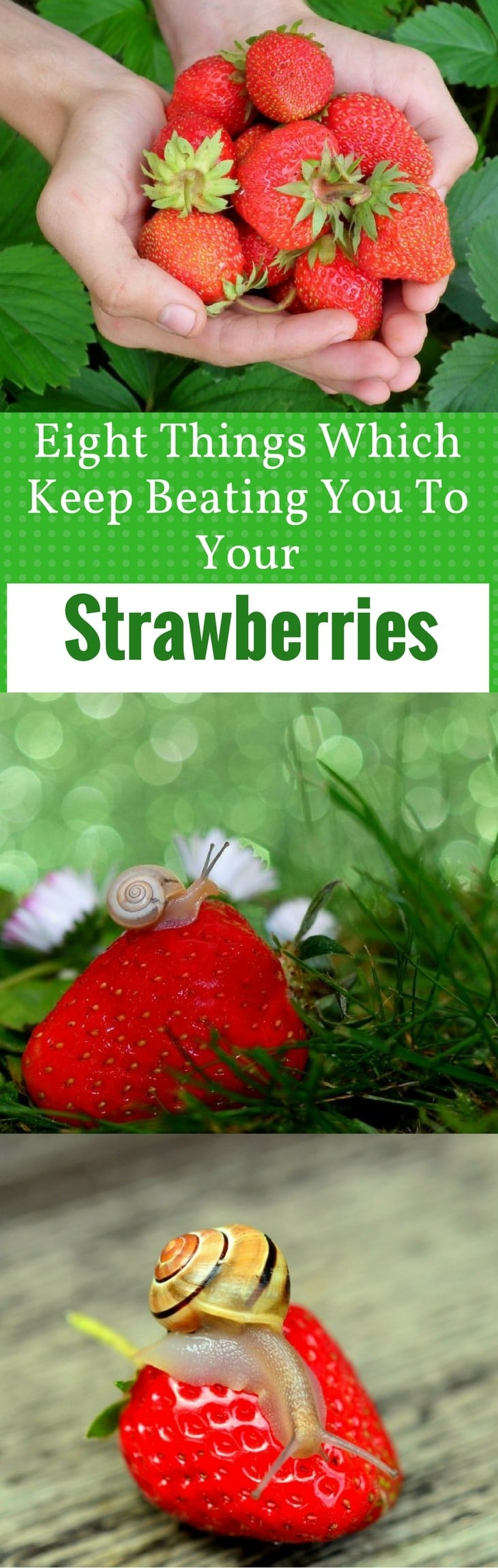 Eight Things Which Keep Beating You To Your - Strawberries