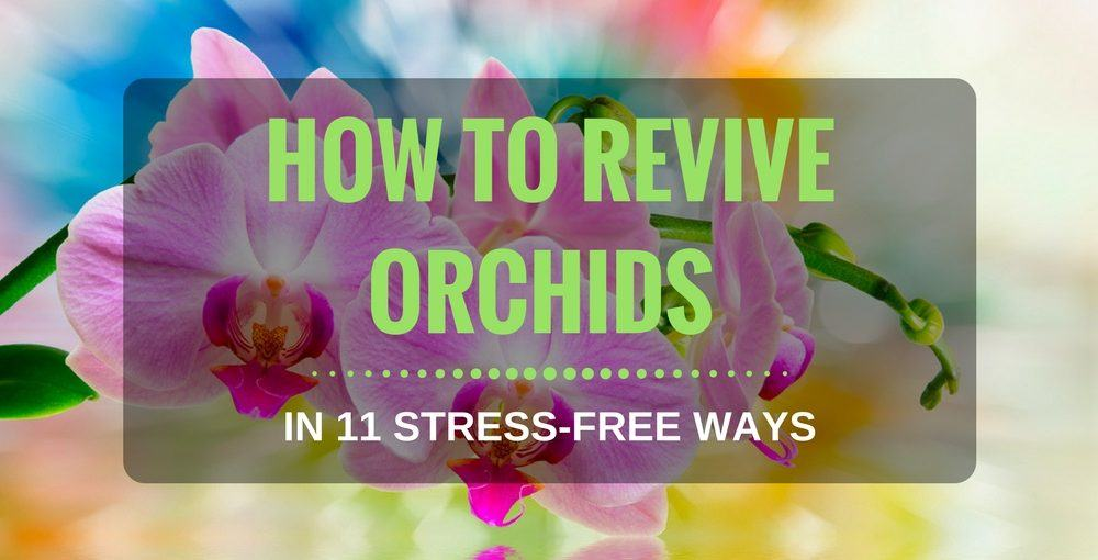 How To Revive Orchids In 11 Stress-Free Ways