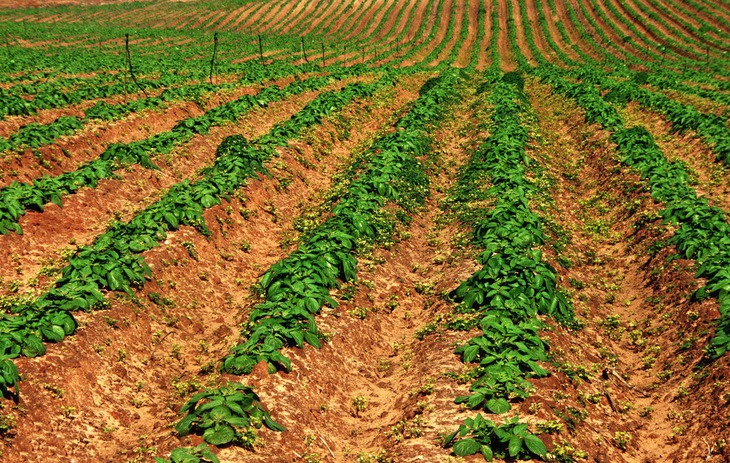 In farming, soil is compacted to keep the seeds and seedlings in place, preventing erosion