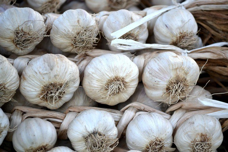 There are many different varieties of garlic