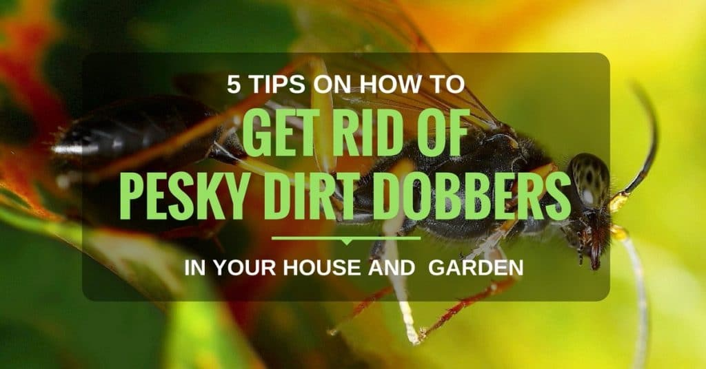 how to get rid of dirt dobbers
