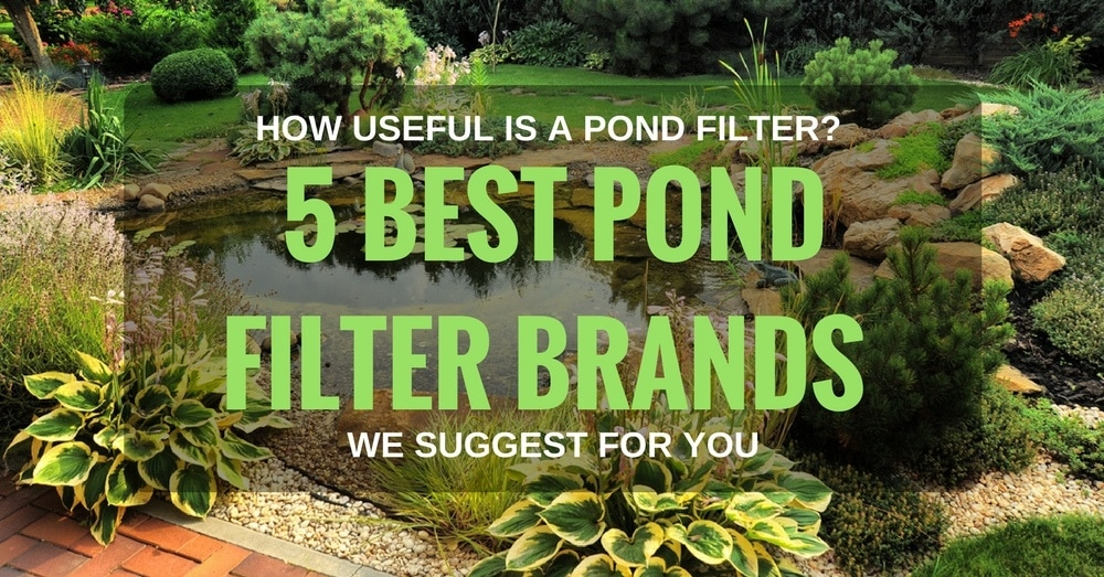 5 Best Pond Filter Brands We Suggest For You