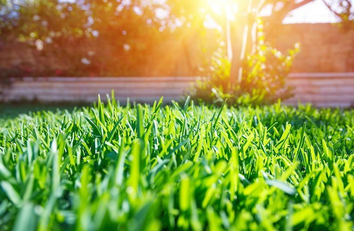 A healthy lawn calls for proper lawn maintenance and prevention