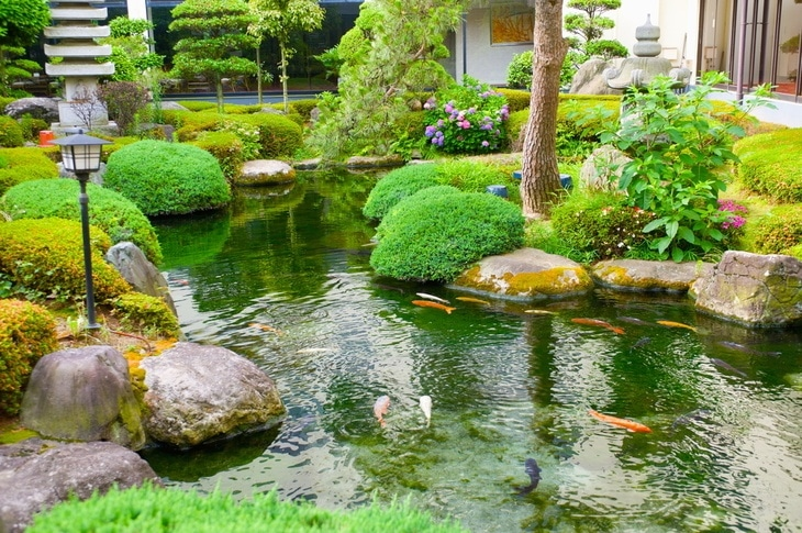 A healthy pond is a great place for aquatic life