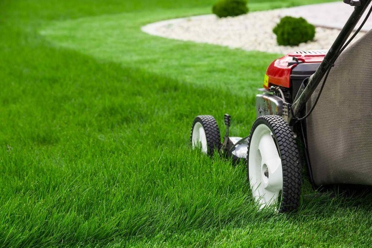 A lawn mower is used to maintain the growth of grasses on the lawn