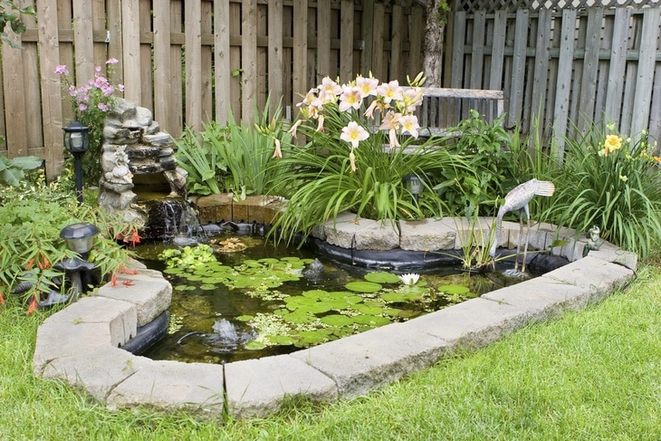 A well-kept pond eliminates dragonfly larvae and prevents it from further maturation