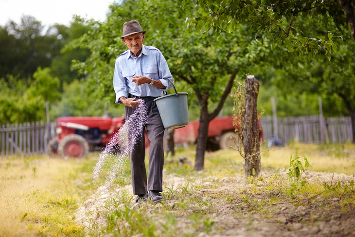An elderly man spreading some fertilizer manually