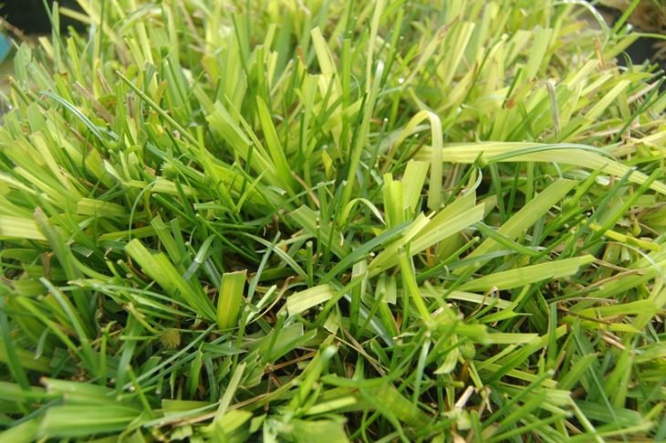 How To Get Rid Of Grass From Plants Naturally