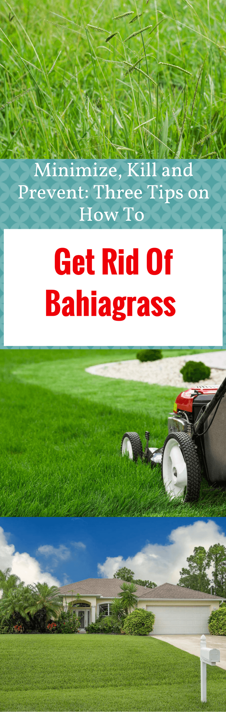Get Rid Of Bahiagrass 1