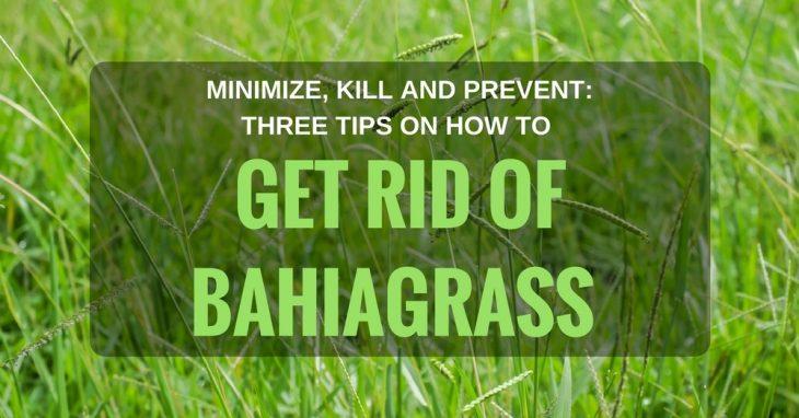 Get Rid Of Bahiagrass