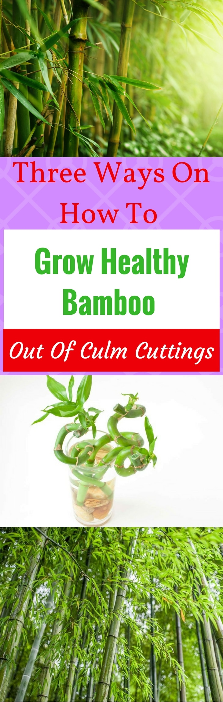 Grow Healthy Bamboo Pin it