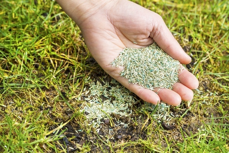 fast growing grass seed how to fast growing grass seed these 5 28825