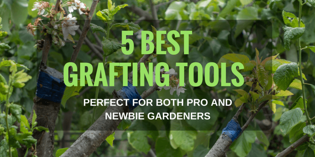 5 Best Grafting Tools Perfect For Both Pro And Newbie Gardeners