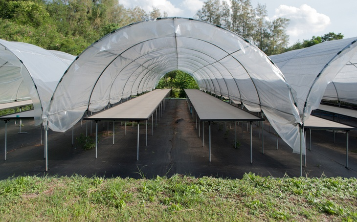 Empty small cactus plant nursery tent at the farm different cactus species & How To Grow The Perfect Garden Tent With 5 Useful Tips