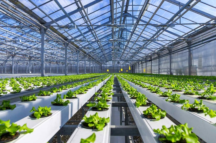 5 Best Hydroponic System For Beginners (2018 Reviews)