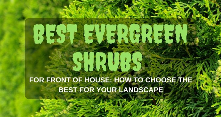 Best Evergreen Shrubs For Front Of House: How To Choose The Best For Your Landscape