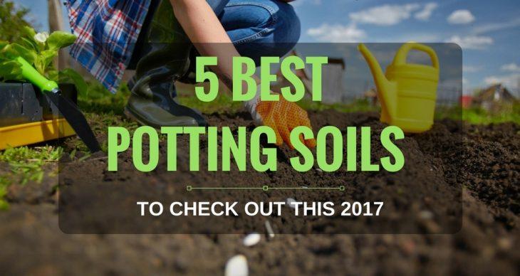 Best Indoor Potting Soil: Top Potting Mix Brands for Indoor Plants