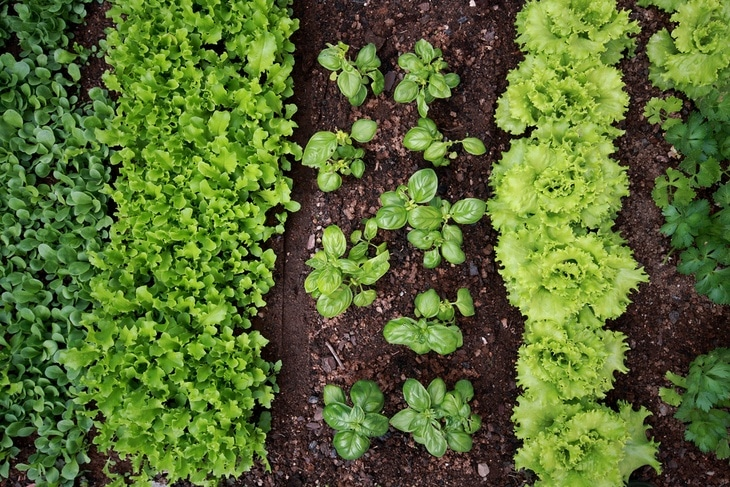 Let the nature take its course is what organic gardening is all about.