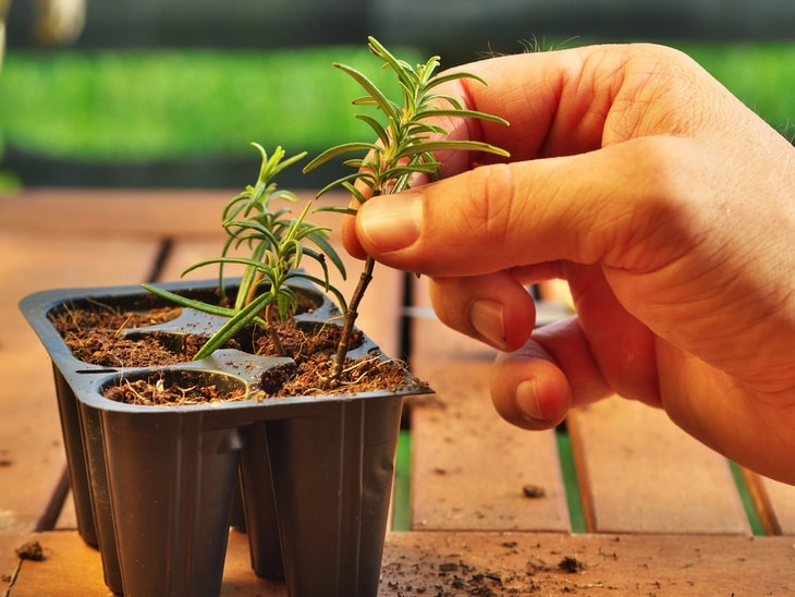 The correct way of clipping plants and preparing them for plant propagation