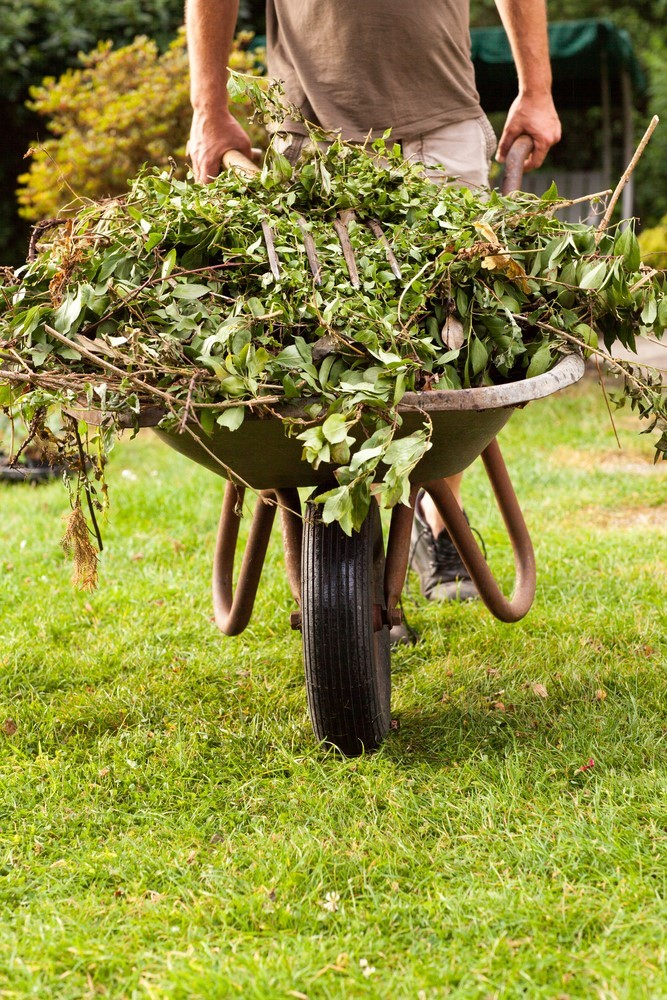 When trimming your garden shrubs, you can use a wheelbarrow to clean up the leftover leaves