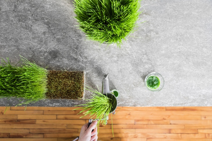 You can plant your own wheatgrass using a pot or container.