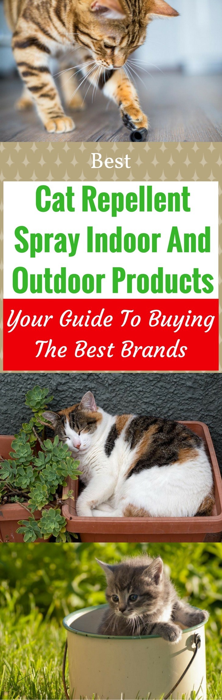 Best Cat Repellent Spray Indoor And Outdoor Products