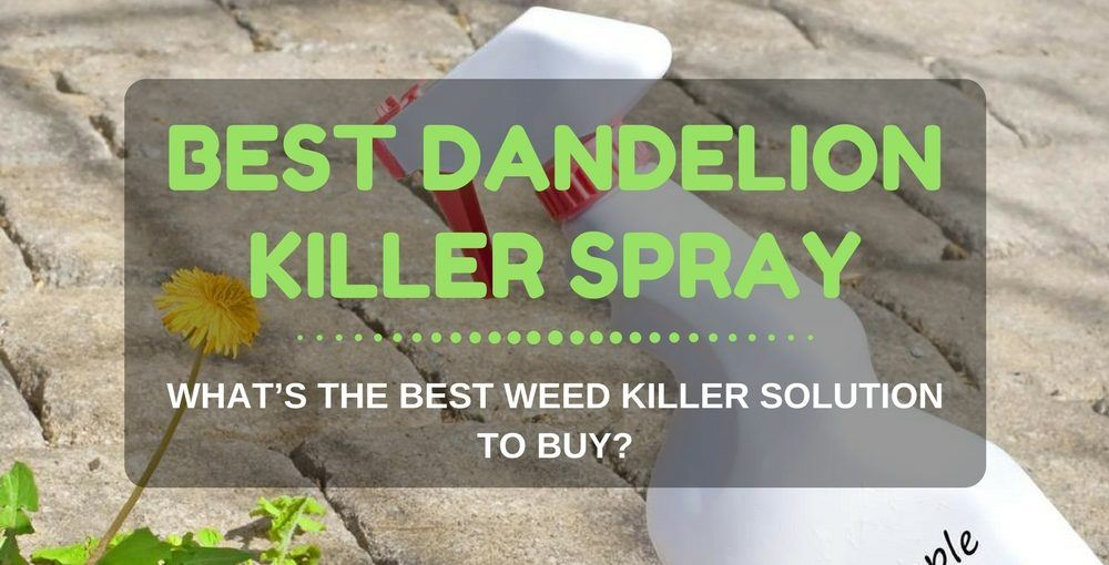 Best Dandelion Killer Spray